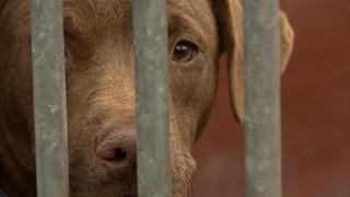 Hondenbezitters bereiden zich voor op jaarwisseling