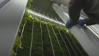 Gewassen in de container groeien in verticale kolommen