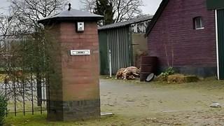 De dode schapen van Kleine Toereers.