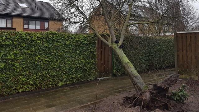 Omgewaaide boom in Markelo - fotograaf: Hof van Twente fotografie