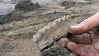 Archeologische vondsten