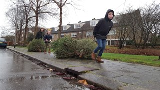 Wat te doen met je oude kerstboom?