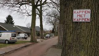 PvdA Hof van Twente wil monumentale eiken behouden