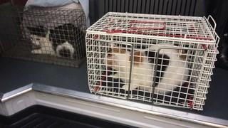 Verwaarloosde katten in Enschede