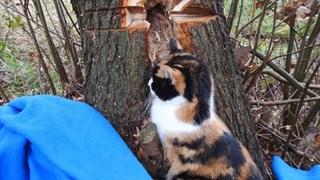 Kat zit vast in boom
