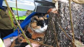 Kat wordt bevrijd