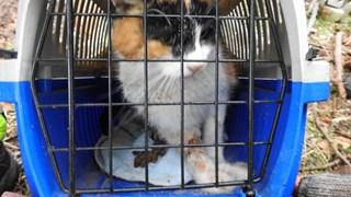 Kat gewond aan poot