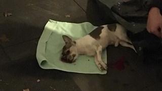 Hondje Django overleefde de aanrijding niet