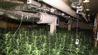 Politie rolt hennepkwekerij op in Denekamp: 1700 planten in beslag genomen