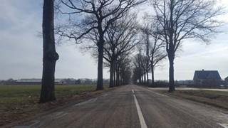 Kap van zo'n honderd bomen langs Jagtlusterallee begonnen
