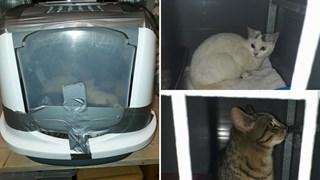 De dichtgeplakte bak en twee van de gedumpte katten