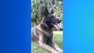 Vallende boom in Hengelo wordt herdershond Rayco fataal