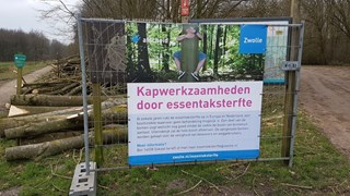 Bomenkap vanwege essentaksterfte