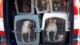 Dierenpolitie neemt 47 verwaarloosde honden in beslag in Hof van Twente, man (63) aangehouden