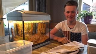 Mervin Goossen houdt mieren als huisdier