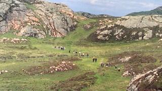 Plegrimage op Iona