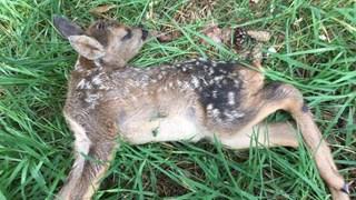 Reekalf op De Sprengenberg doodgebeten door loslopende hond