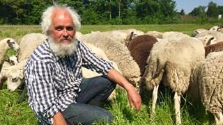 Schaapherder Henk van der Sar uit Schuinesloot