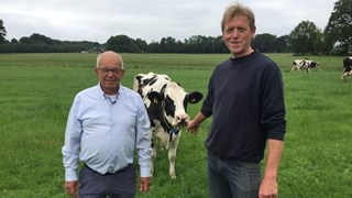 Koe voor de winnaar Halve van Zwolle