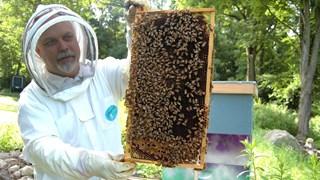 Neem zondag een kijkje bij Bijenteeltvereniging in Hengelo