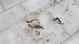 Brandstichting en vernielingen bij basisschool Hengelo