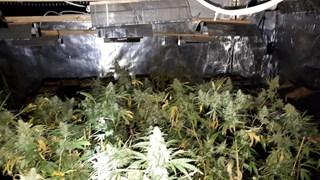 De politie ontdekte een kwekerij met 200 planten