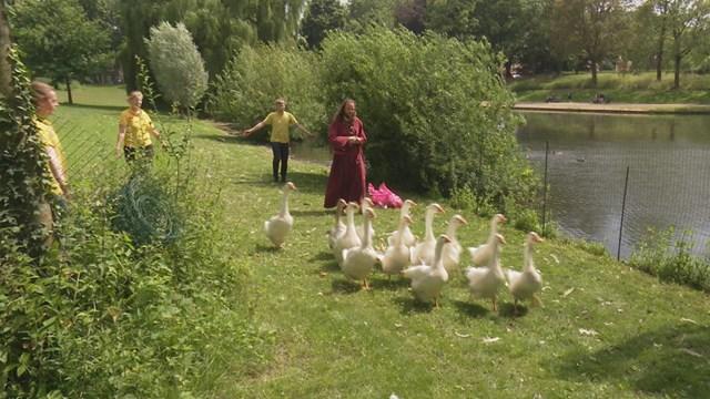 Deventer laat ganzen vangen - fotograaf: RTV Oost