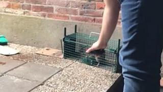 De Oldenzaler wilde de rat niet pijnigen