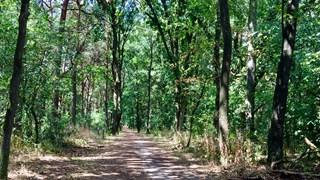 Het mooiste bospaadje van Overijssel