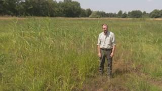 Ecoloog Mark Zekhuis in een van de opgedroogde poelen: 'Normaal staat het water hier tot aan mijn knieën'