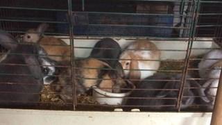 De dieren zaten in een veel te klein hok