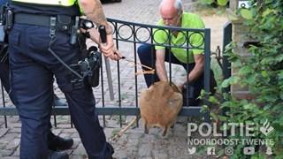 Politie redt ree in Losser