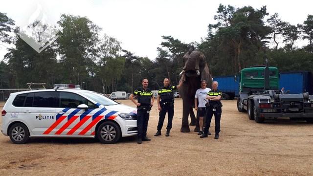 Olifant in Ommer tuin - fotograaf: Facebook / Politie Ommen