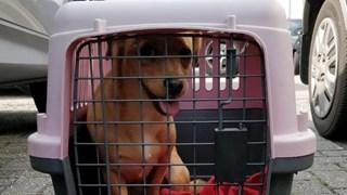 Politie bevrijdt hond uit auto bij Ikea Hengelo