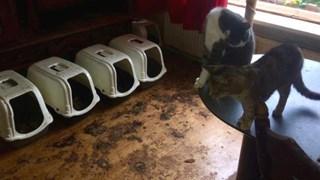 Katten en honden in beslag genomen