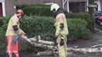 Boom over de weg in Nijverdal