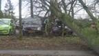 Auto's beschadigd door omgevallen boom