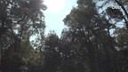Brandtoren krijgt laatste zetje en kiepert het bos in