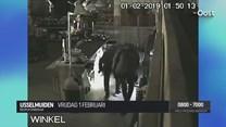 Camerabeelden van inbrekers aardbeienkweker IJsselmuiden